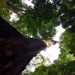Foto de Chachagua Rainforest Hotel & Hacienda
