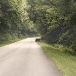 Blue Ridge Parway