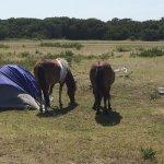 Photo de Assateague State Park Camping
