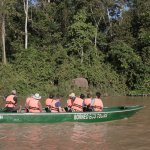 Witnessing elephants on the river cruise