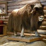 The Musk ox in the Villreinen bistro