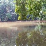 Udawattekele Sanctuary Foto