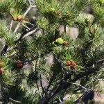 Chiricahua National Monument Foto