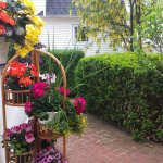Flowers back yard