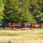 Foto de 320 Guest Ranch