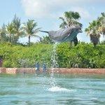 Dolphin Cay Foto