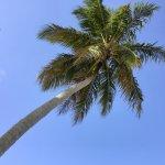 Foto de Grand Paradise Samana