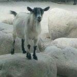 Granby Zoo (Zoo de Granby) Foto