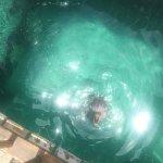 Atlantis - Harborside Resort Foto