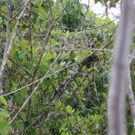 Spot the iguana (still amazed how our guide saw it from 50+m in a boat)