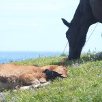 Kandachi Horses and Their Habitats