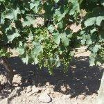 Photo de Peller Estates Winery