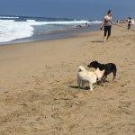 Photo of Huntington Dog Beach