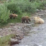 Cubs Playing in the Creek