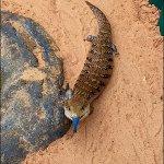Alice Springs Reptile Centre Foto