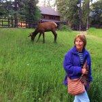 Elk Summer.?