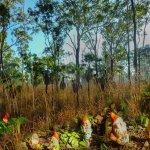 Φωτογραφία: Banyan Tree Caravan & Tourist Park