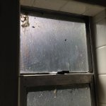 Boxelder bugs in bathroom window