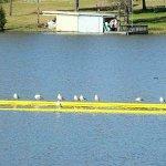 gulls sitting on swim area surround