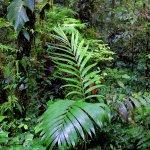 Deep green cloud forest
