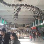 Foto de Museo Argentino de Ciencias Naturales Bernardino Rivadavia