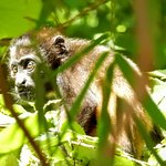 We saw howler monkeys every day