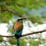 A turquiose-browed motmot spotted at Onda spa