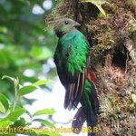 Quetzals pas loin !