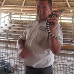 Showman with a baby gator