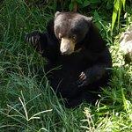 Area del Samboja Lodge nel quale si riabilitano gli Orsi (Sun Bears)