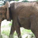 Tarangire Safari Lodge Photo