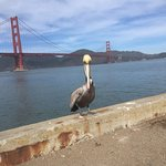 Flamingo near Golden Gate Bridge San Francisco