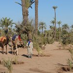 Guided camel riding