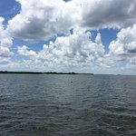 Wild Dolphin Excursion