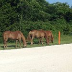 Three horses at the end of the Bayside Road