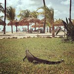 Sitting just outside our beach side door watching Iguanas play