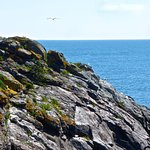 Monhegan Island Foto