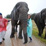 Zdjęcie Knysna Elephant Park Lodge