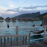 Photo de Hilton Moorea Lagoon Resort & Spa