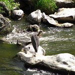 Heron looking for lunch in the Crooked River