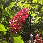 Banana Bank Lodge & Jungle Horseback Adventure Foto