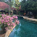Beautiful pool & garden