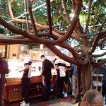 """Ein Gummibaum und das Buffet im Treibhaus, jetzt """"Bambus-Garten""""..."""