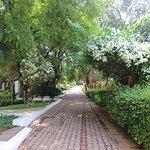 Lush landscaped driveway