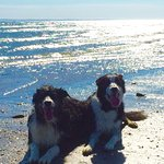 Happy dogs at the beach before their hotel stay!