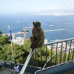 Ape at top of cable car (Hotel is just above the bottom cable car station)