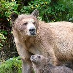 Amber and cub