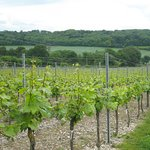 The Solent Wine Experience
