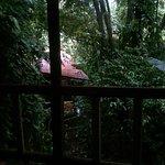 Foto de Pachira Lodge