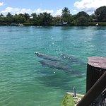 Foto de PonTiki Boats and Cruises